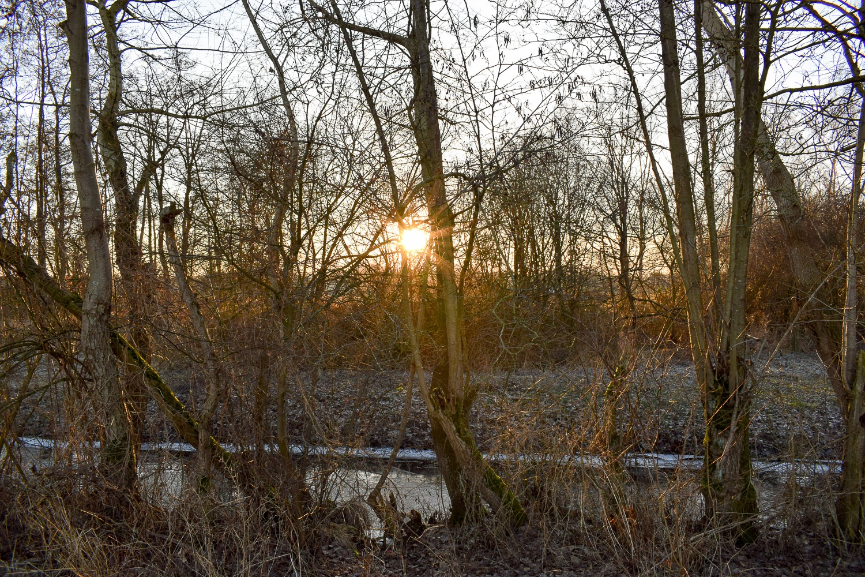 Bornhorst – Online-10