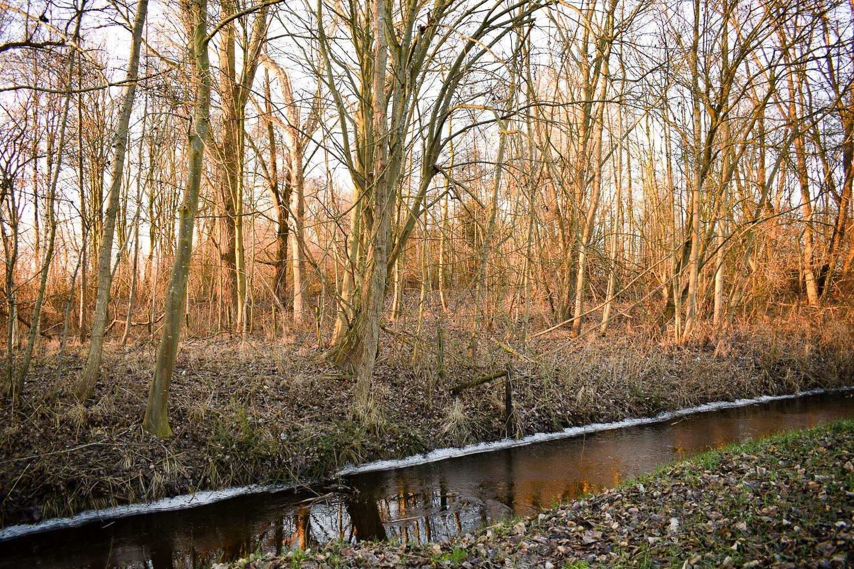 Bornhorst – Online-14