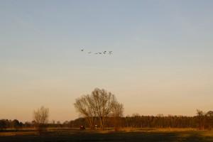 Bornhorst - Online-11