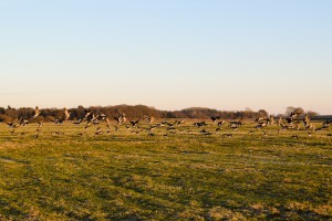 Bornhorst - Online-5