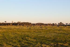 Bornhorst - Online-6